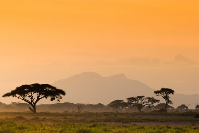 Amboseli savanna in late afternoon sunlight, dotted with Acacia trees