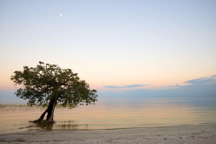 Lone tree in water, Lake Bangweulu, Zambia