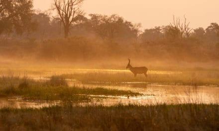 African Antelope – Complete safari guide