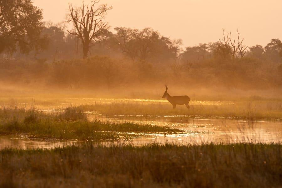 African Antelope – Complete safari guide 2019 – 2020