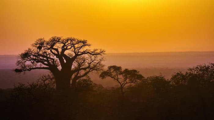 Kruger National Park at sunrise, with a majestic baobab tree as a backdrop