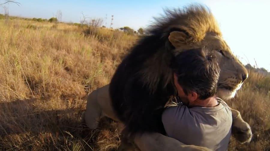 Meet Kevin Richardson – The lion whisperer