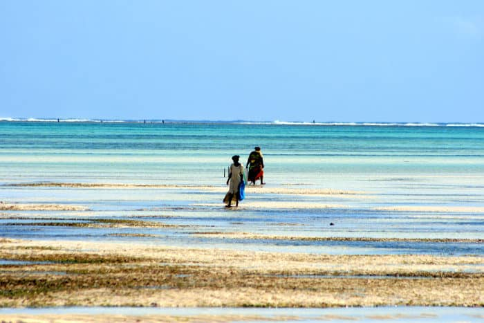Two women gather some seaweed during low tide in Pongwe beach