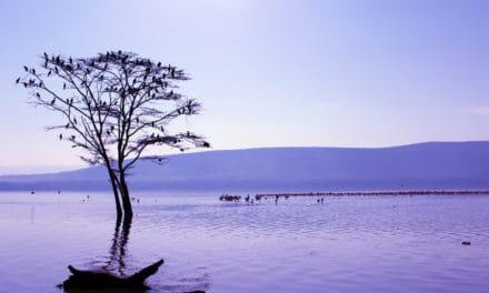 Lake Nakuru safari guide