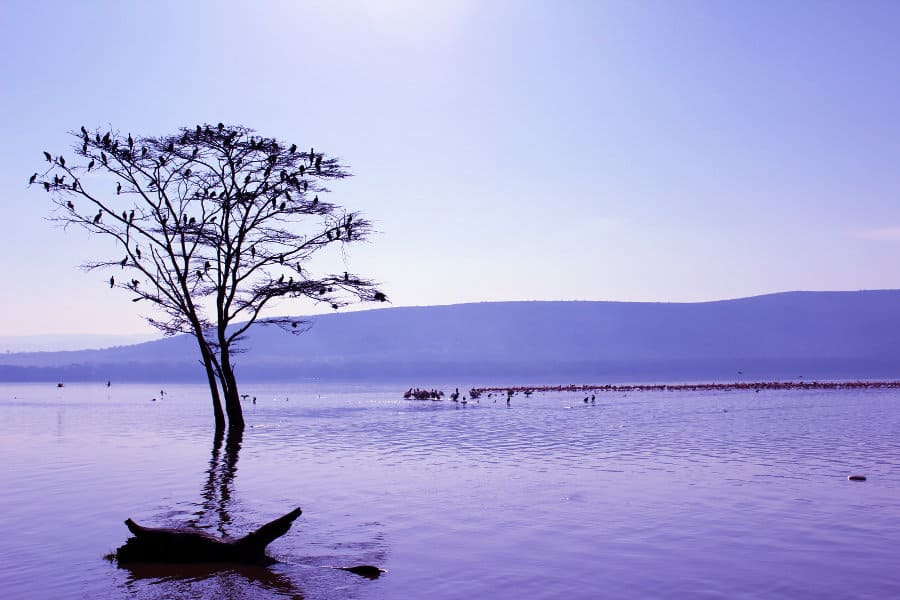 Lake Nakuru safari guide