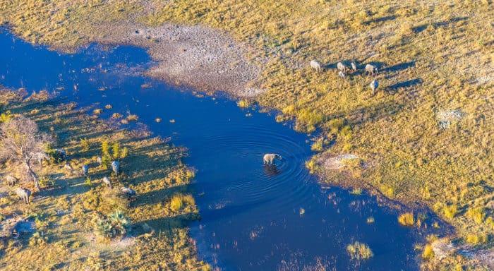 Herd of elephants from above in the Okavango Delta