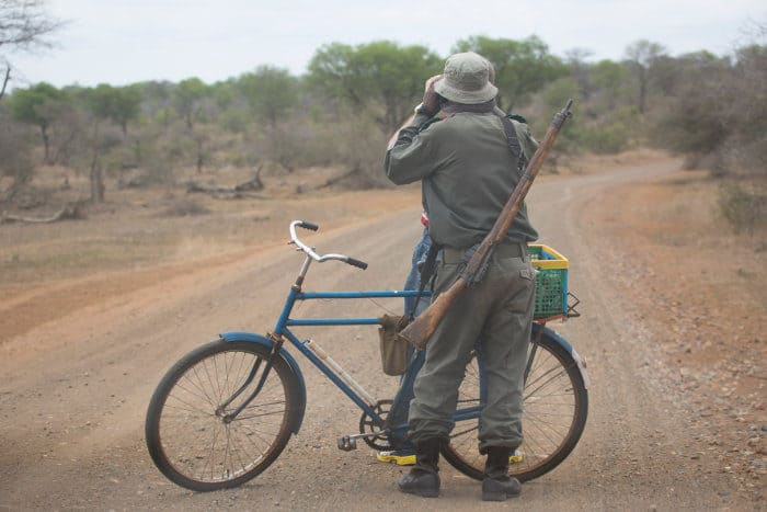 Park ranger looks through his pair of binoculars for potential game, armed with a rifle and a bicycle