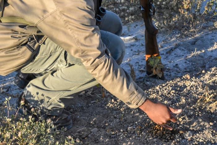 Ranger sharing his knowledge about impala droppings in Etosha, Namibia