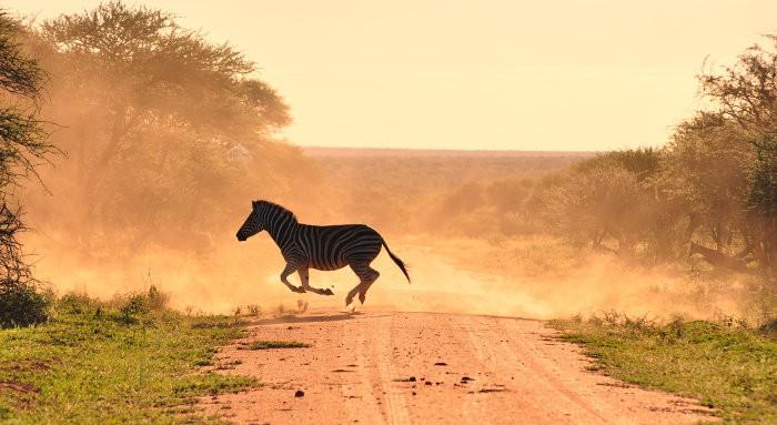 Zebra crossing in cloud of dust