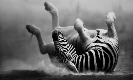 7 incredible black and white animals – Africa's monochrome wonders