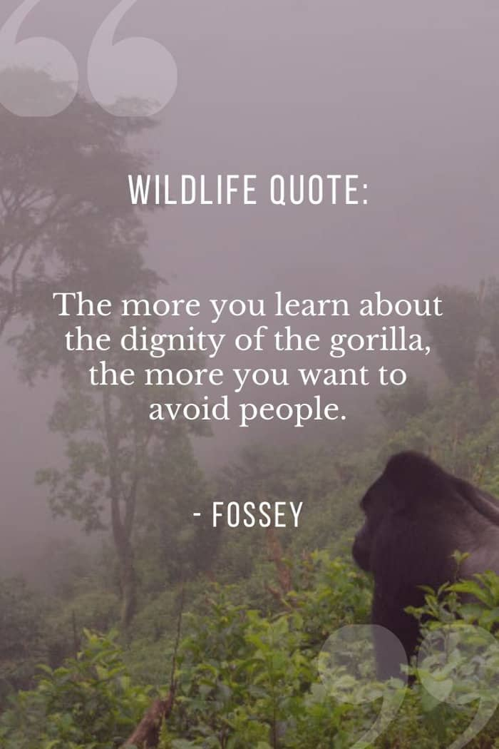 Dian Fossey wildlife quote about the dignity of gorillas