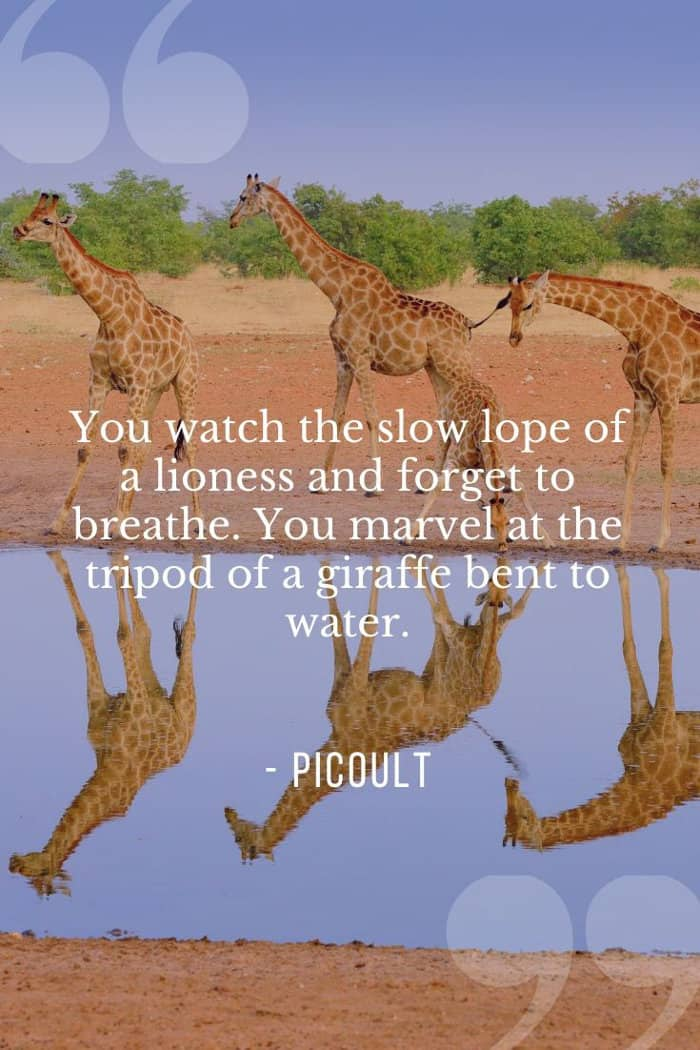 Jodi Picoult quote about a lioness and giraffe