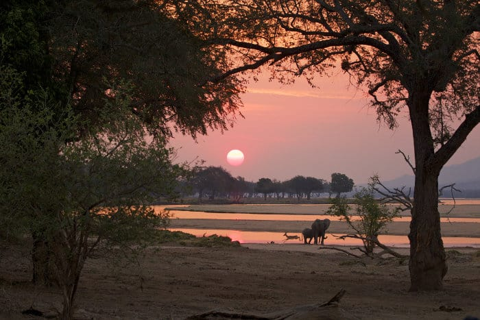 Mana Pools at sunset, with elephants and impala running past