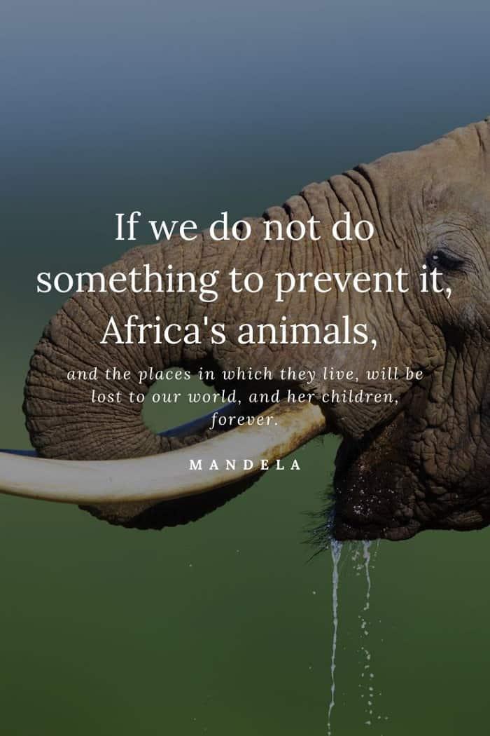 Nelson Mandela wildlife quote