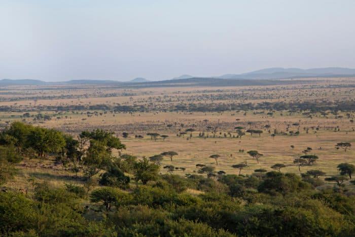 Scenic view of the Serengeti plains from the Serengeti Sopa Lodge