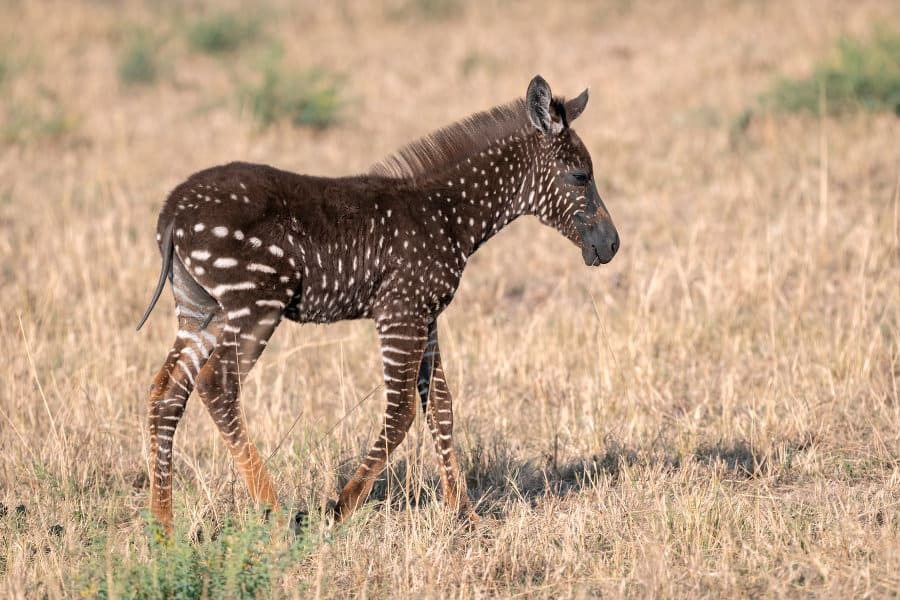 Spot Africa's spotted animals