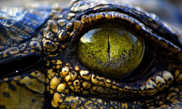 10 Incredible facts about crocodile eyes