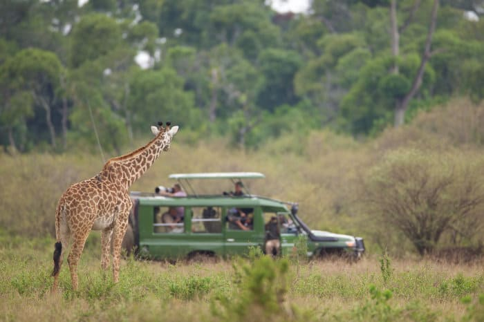 Curious giraffe stares at a group of photographers in their safari jeep