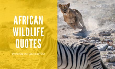 Africa's most wonderful wildlife quotes