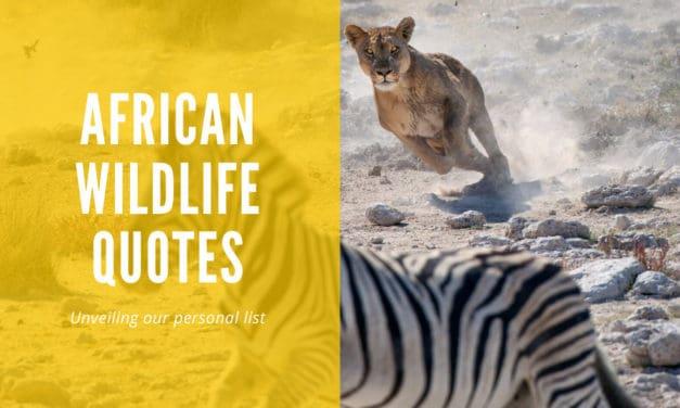 Africa's most wonderful wildlife quotes