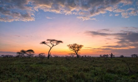 6 amazing plains of Africa to discover and explore