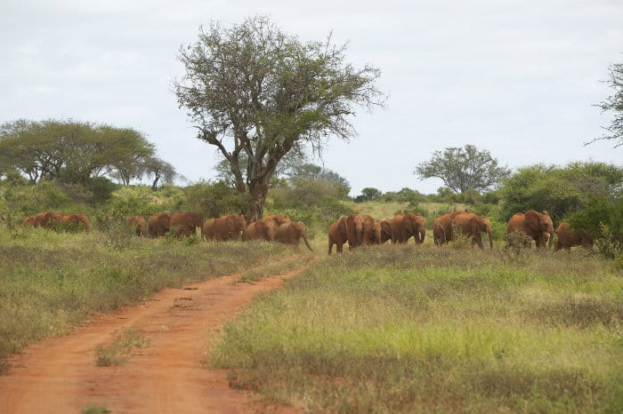 David Sheldrick elephants in Tsavo National Park, Kenya
