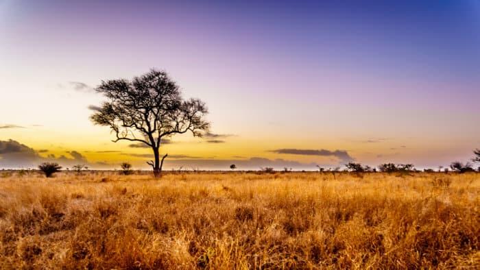 Sunrise over Kruger's central savanna grasslands, during the dry season