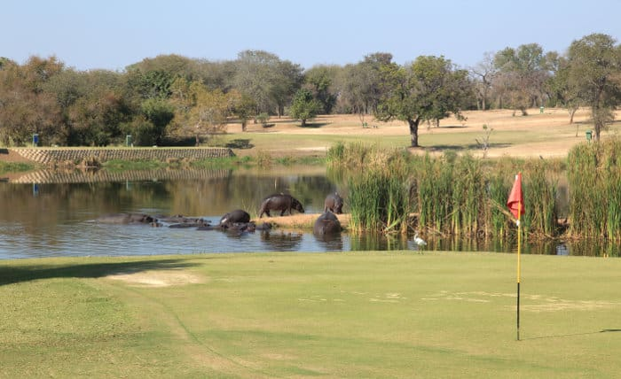 Skukuza golf course with hippos in the background, near a putting green