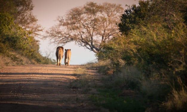 Kruger National Park: the complete safari guide