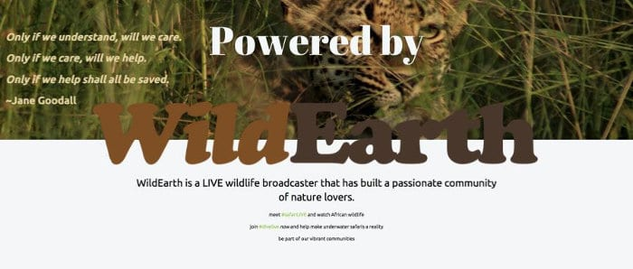 LIVE Cams Powered by WildEarth