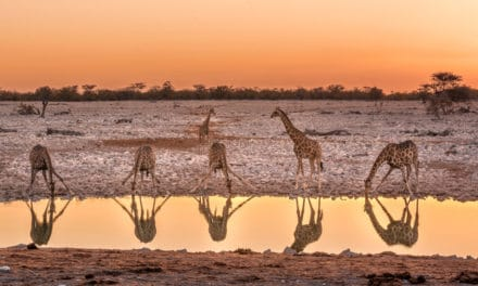 Etosha National Park – The ultimate guide