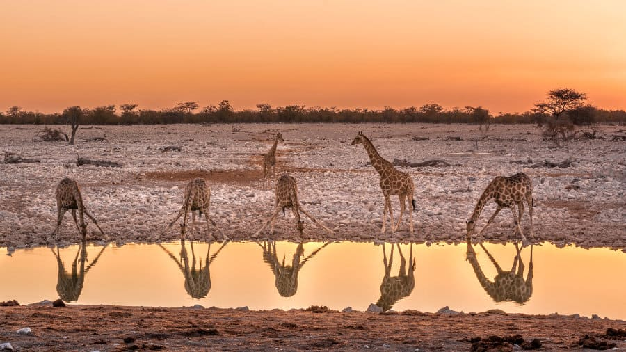 Etosha National Park – The ultimate guide