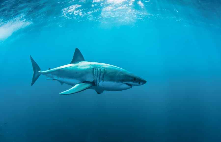 Do sharks have bones? The answer might surprise you