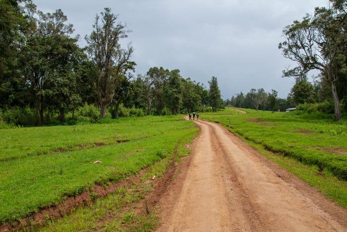 Beginning of the Mount Kenya hike (Naro Moru hiking trail)