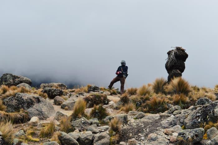 Hiker against foggy background, Mount Kenya National Park