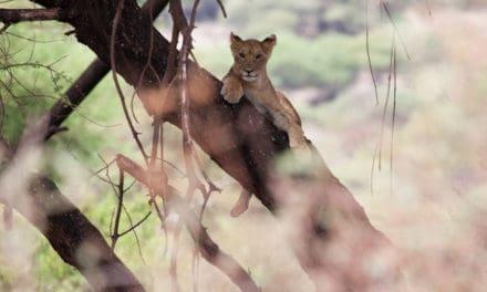 Lake Manyara National Park – The ultimate unbiased guide