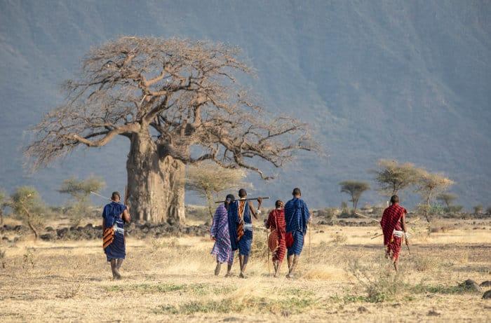 Maasai warriors walking on the African savanna
