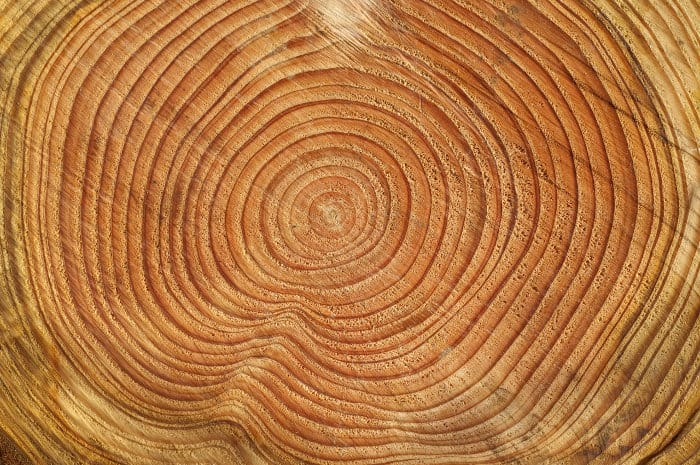The older the tree, the more tree rings it has