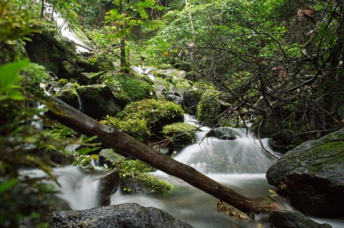 Long exposure waterfall, Korup National Park, Cameroon
