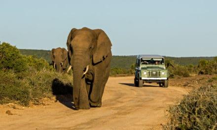 Addo Elephant Park – Safari and accommodation guide