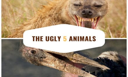 The ugly 5 animals of Africa – An unsightly safari