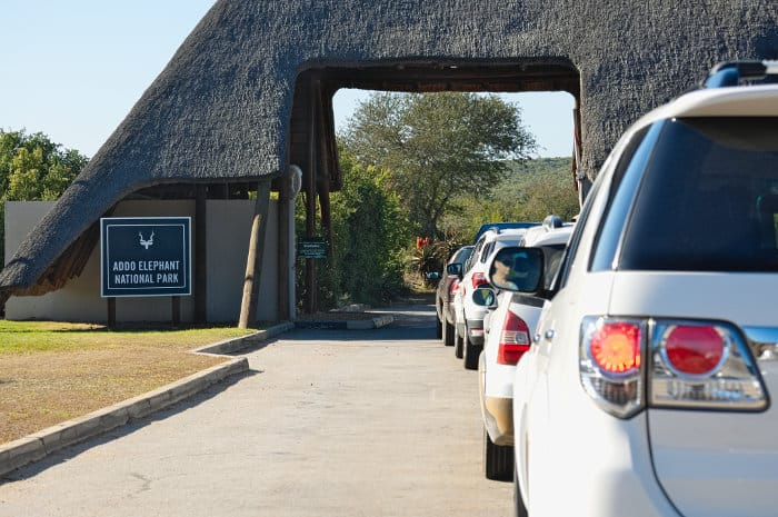 Lots of cars queuing at the Addo Elephant Park entrance gate