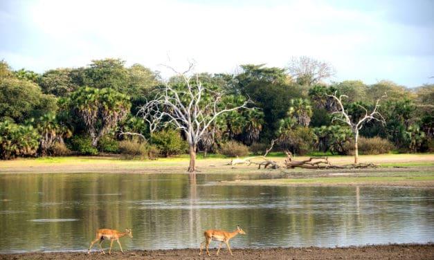 Selous Game Reserve safari guide