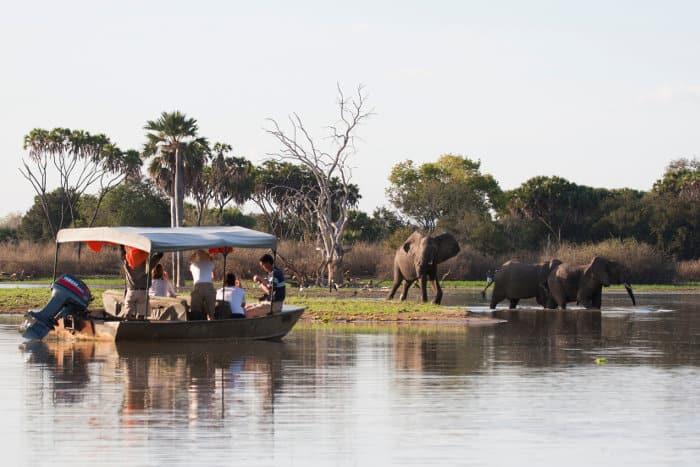 Tourists approach a herd of elephants on a boat safari, Selous