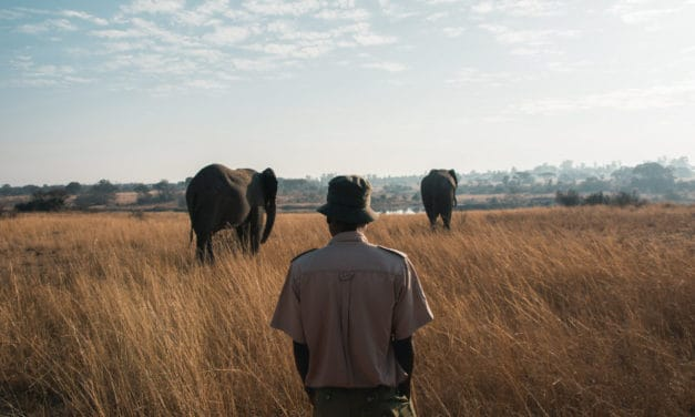 Top conservation NGOs protecting African wildlife