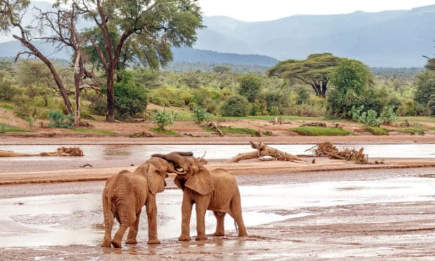 Samburu National Reserve safari guide