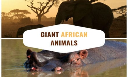 6 giant animals that exist on the African plains