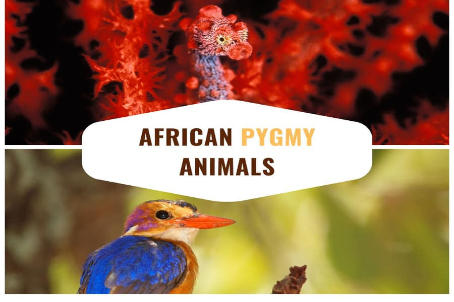 Cutest pygmy animals: 6 small creatures found in Africa