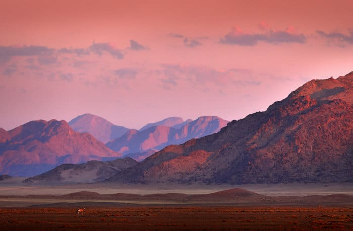 Lone gemsbok at sunset, with orange dunes as a backdrop