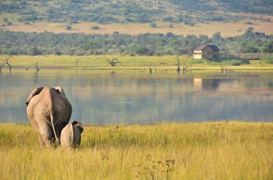 Pilanesberg Game Reserve safari guide